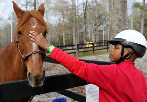 Horseback Riding Camps in PA